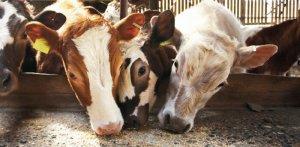 """Форум """"АГРО.PRO"""" включен в календарный план для руководителей животноводческих хозяйств"""