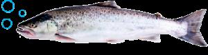рыба-1
