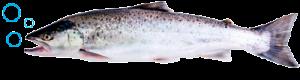 рыба-2