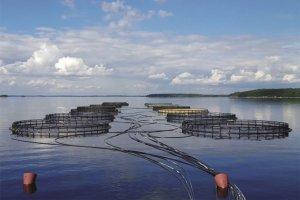 РЫБА: Как совместить рыбу, устрицы и водоросли на одной ферме