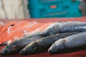 РЫБА: Диагностируем вовремя — от виремии карповых до альфавирусов лососевых