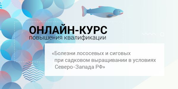 600_300_2