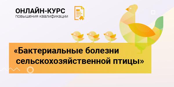 vcube_novikova_600_300